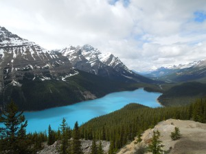 Peyto Lake. Best lake in Banff / Jasper.